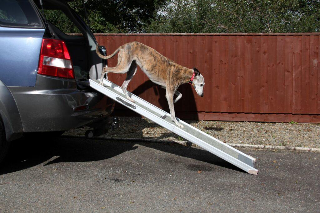 Rampe für einen Hund mit Arthritis.