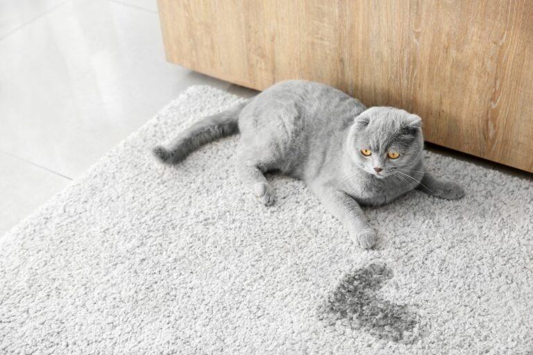 Katenurin-Geruch im Teppich entfernen.