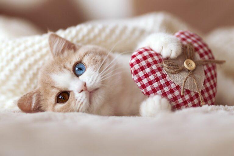 Valentinstag für Katzen