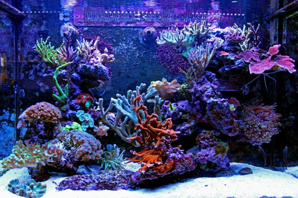 Meerwasseraquarium mit Korallen ohne Fische