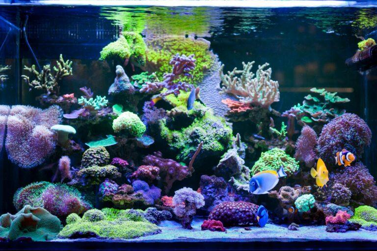 Meerwasseraquarium einrichten mit Fischen und Korallen
