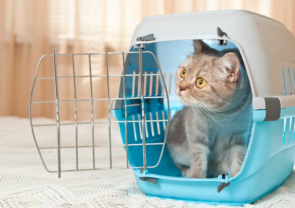 Katze Adoption in Transportbox