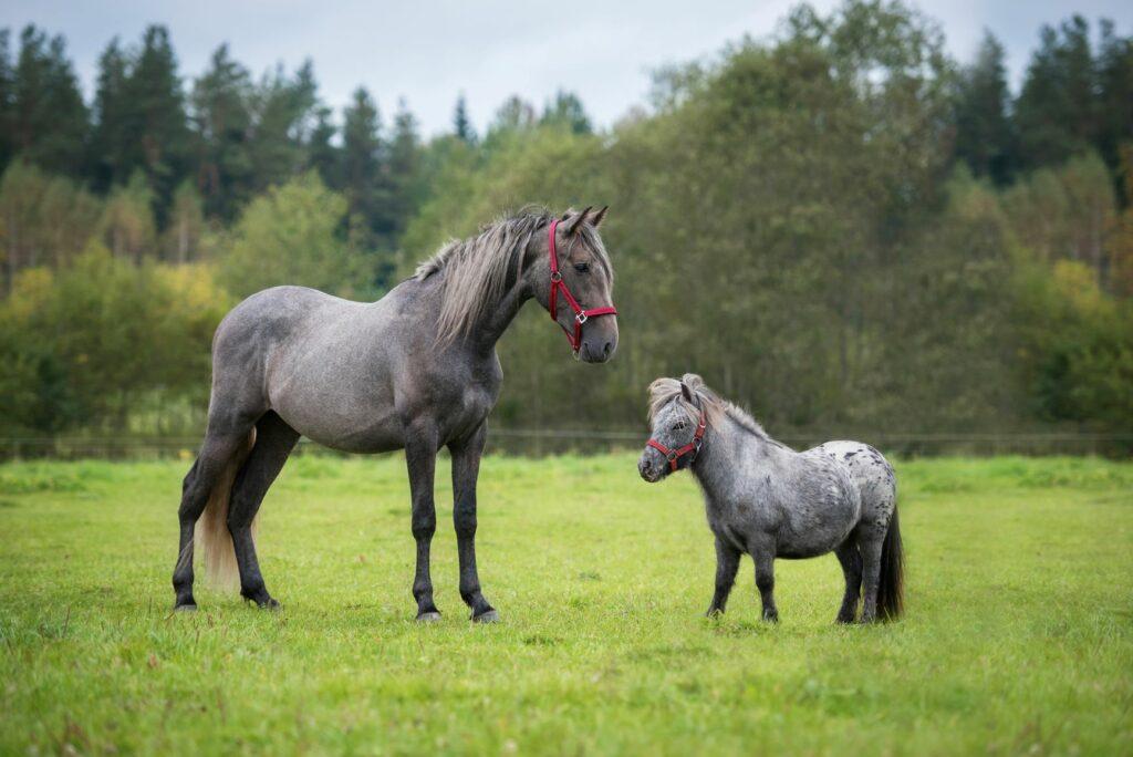 Ein Pony und ein anderes Pferd