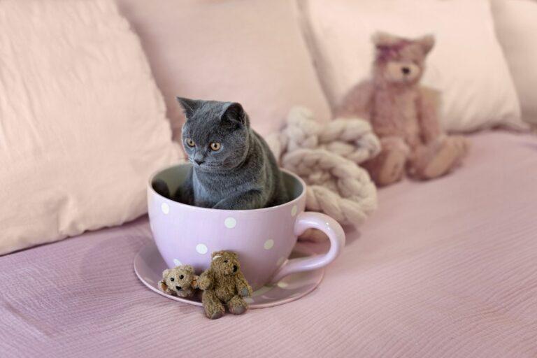 Teacup-Katze sitzt in Tasse