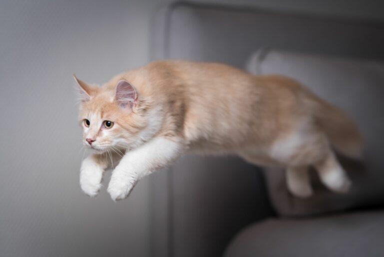 Anatomie einer Katze zrigt sich deutlich im Sprung