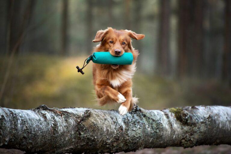 Baumstamm balancieren als Fitness für Hunde