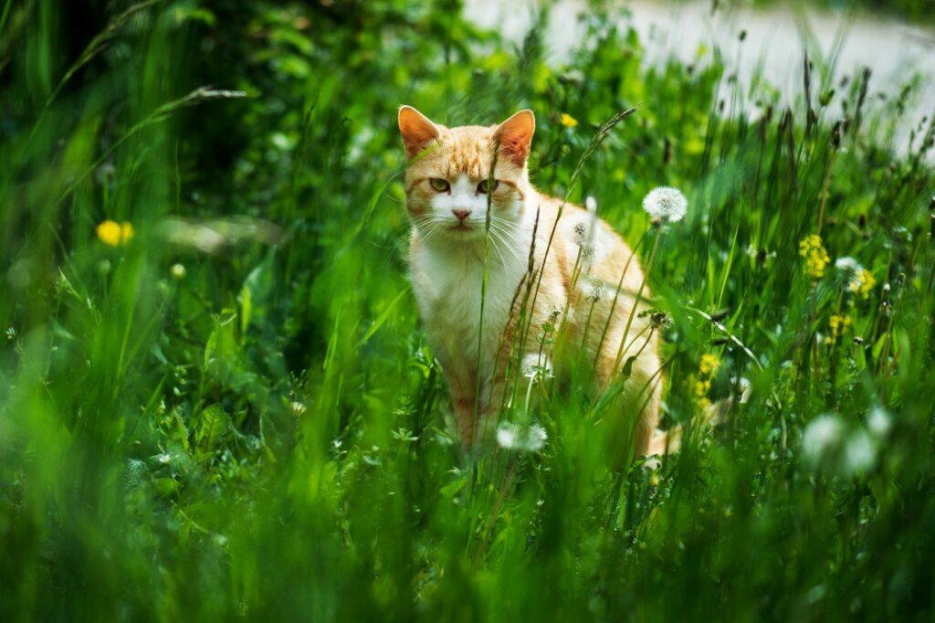 Freigänger Katze im Gras