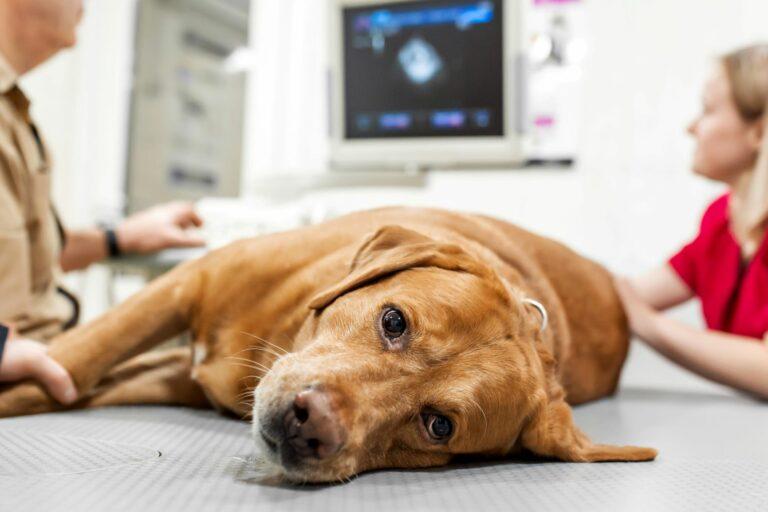 Hundekrankversicherung für Tierarztbehandlung Hund