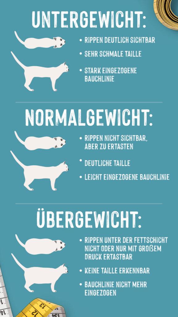 Infografik Übergewicht Katze erkennen