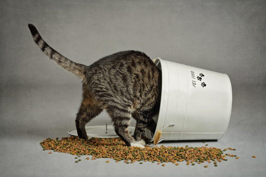 Katze in Kübel voller Trockenfutter
