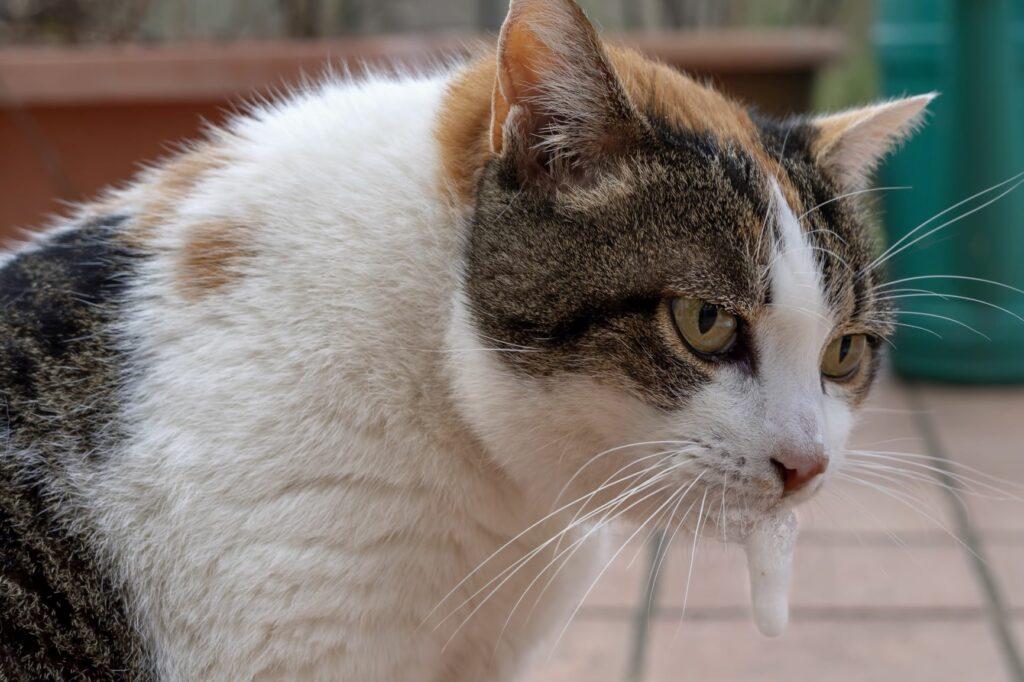 Katze mit Schaum vor Schnauze