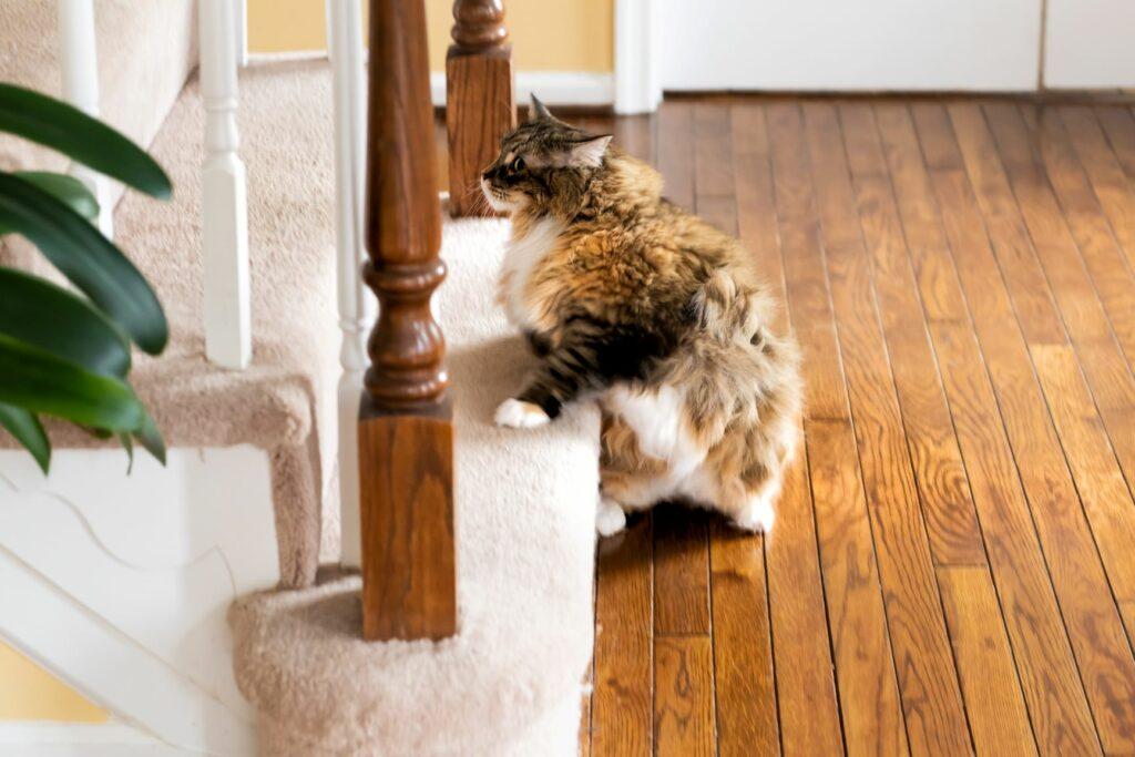 Treppensteigen als Sport für Katzen