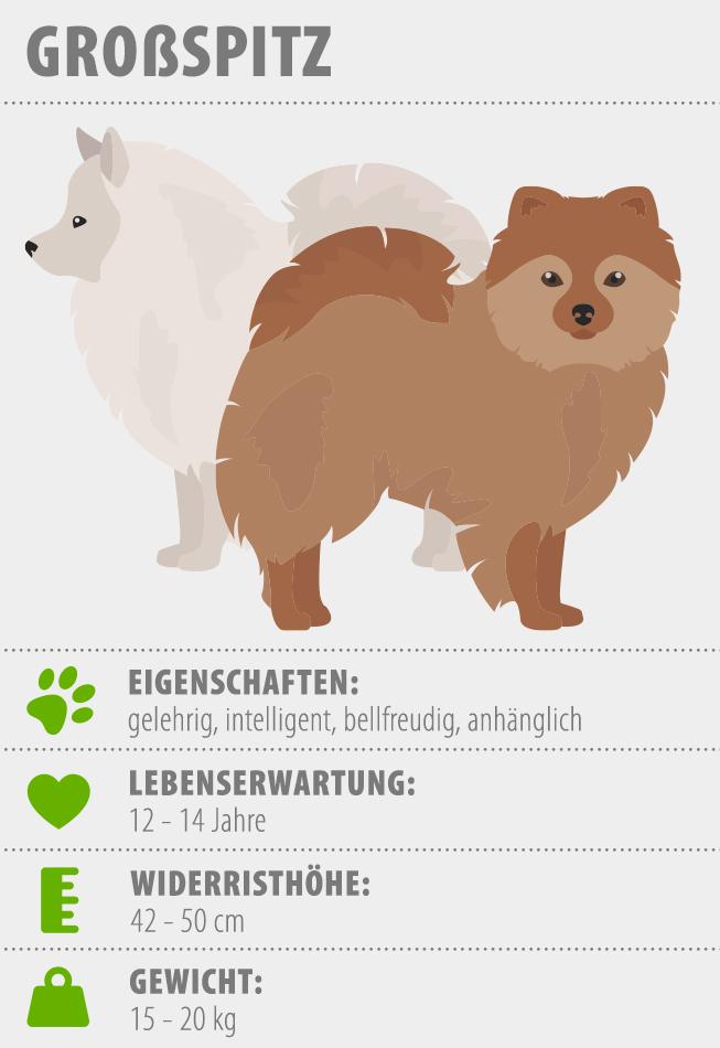 Merkmale Grossspitz Hund