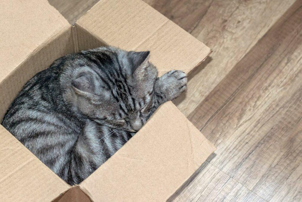 Katze liegt in Karton