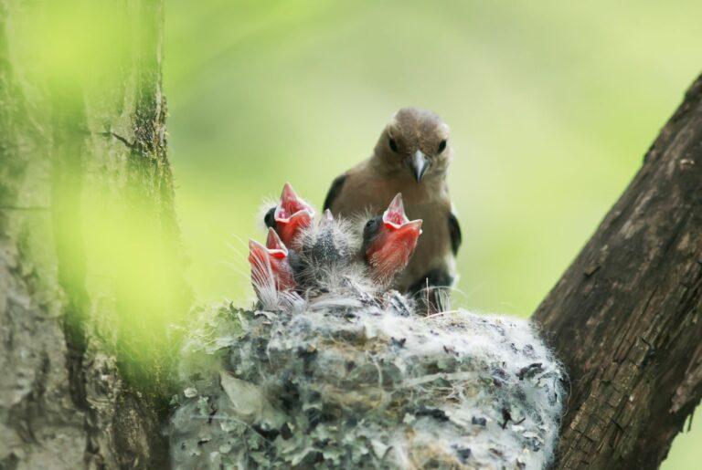 Brutzeit bei Vögeln