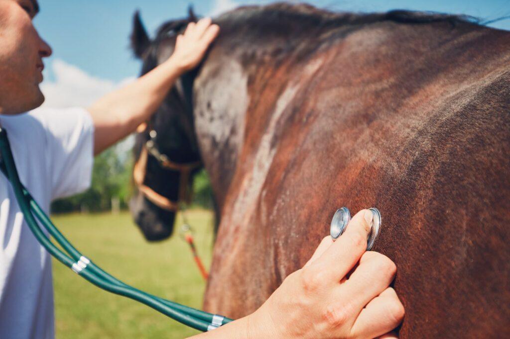 Tierarzt untersucht Pferd