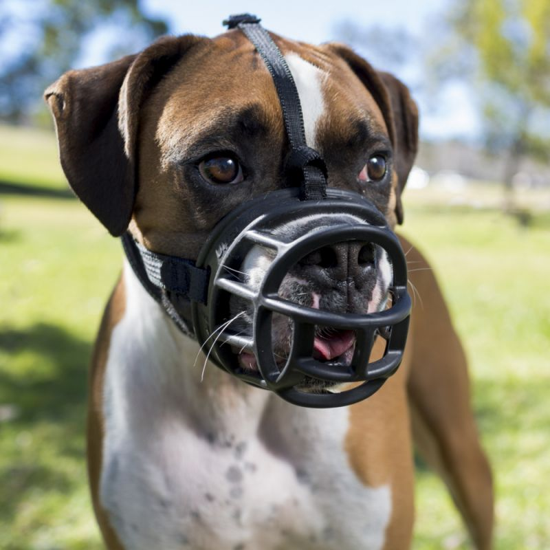 Hund mit Maulkorb im Park