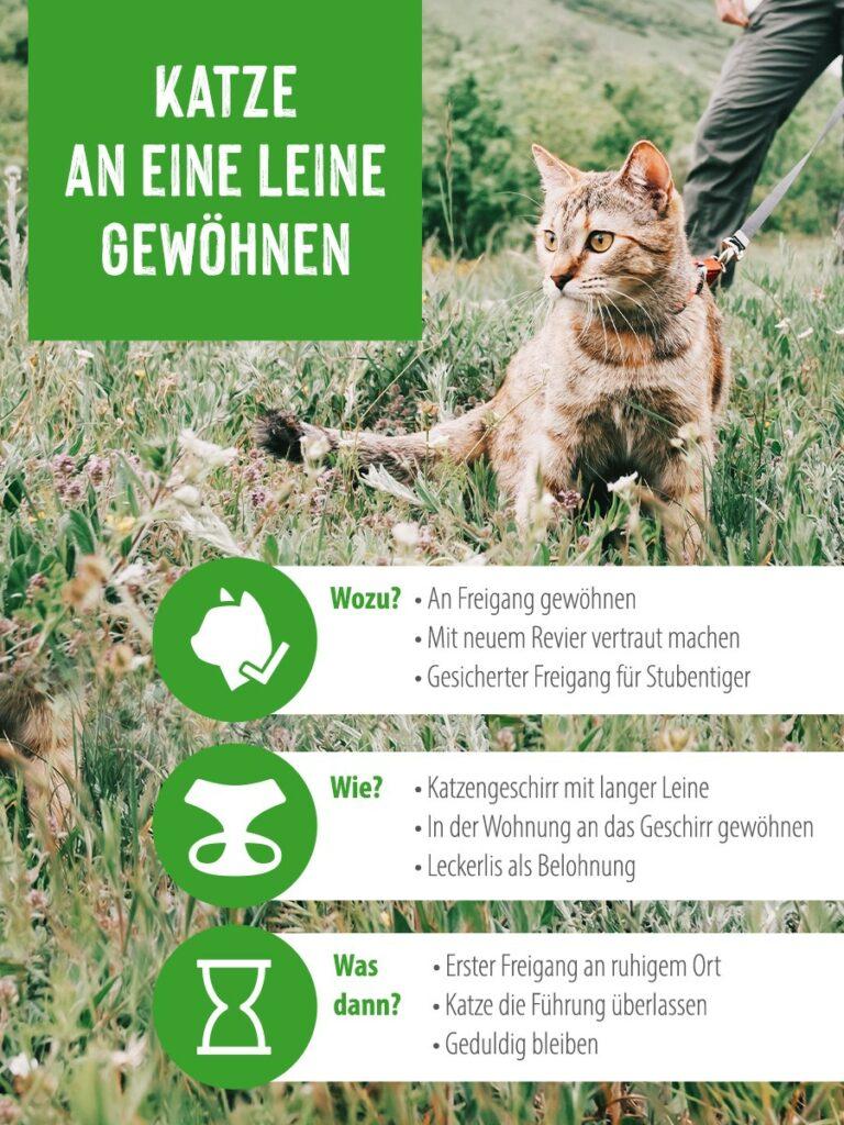 Katze an Katzenleine im Gras