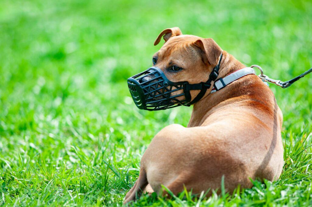 Maulkorbpflicht beim Hund