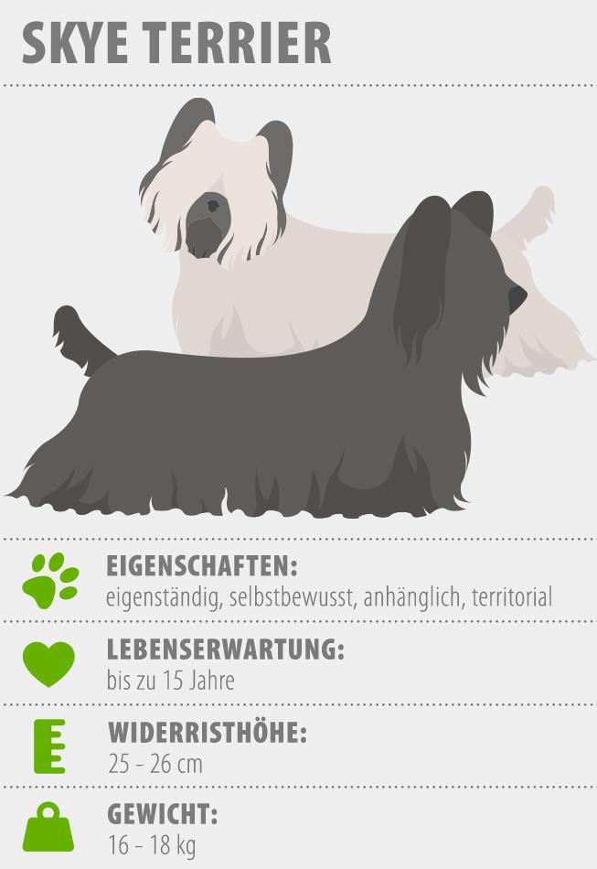 Merkmale Skye Terrier Hunderasse