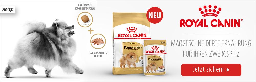 9_Royal_Canin_Breed_pomeranianimage_12042021
