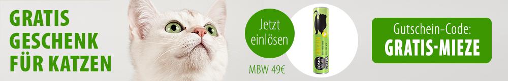 cat_gutschein_article_banner