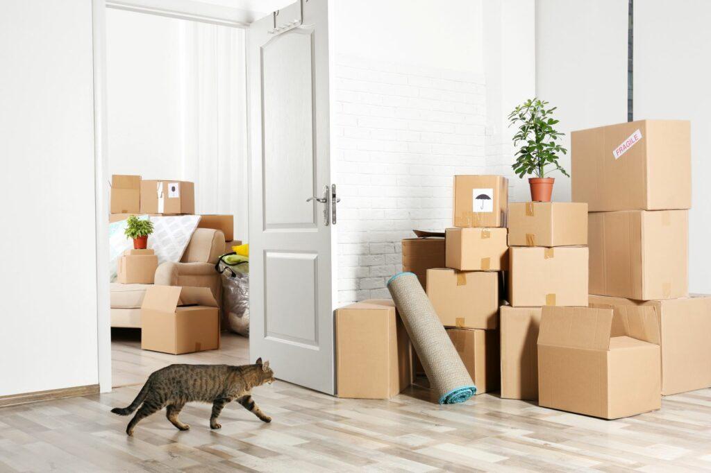 Katze zwischen Kisten