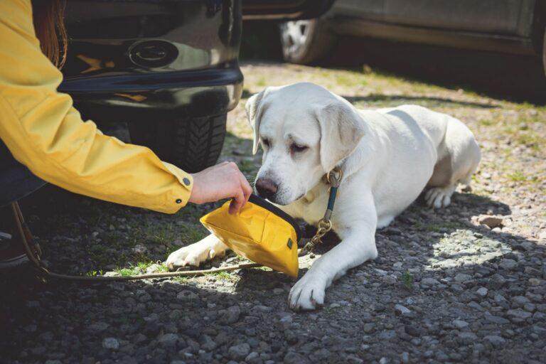 Labrador mit Reisenapf