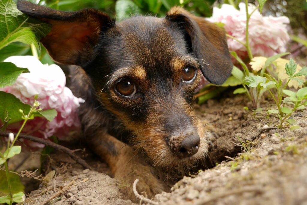 Hund von Loch im Garten