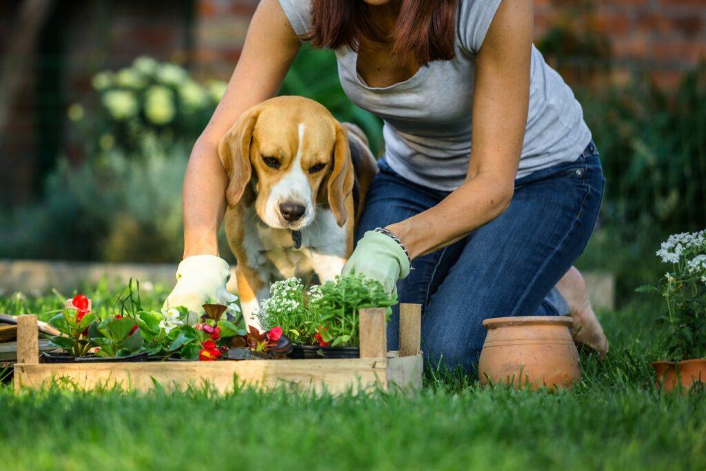 Frau arbeitet im Garten mit Hund