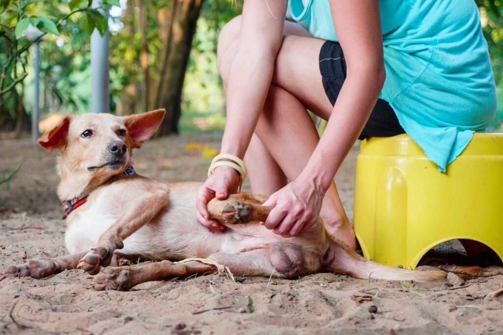 abtasten des lahmenden Hundes