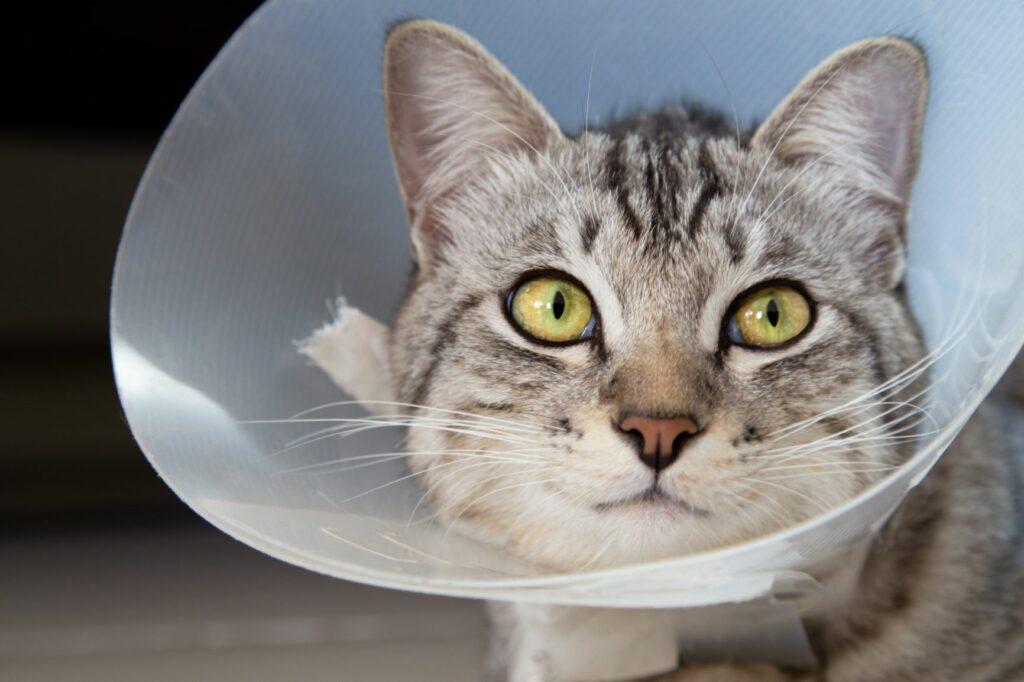 Katzenversicherung gegen Operationen