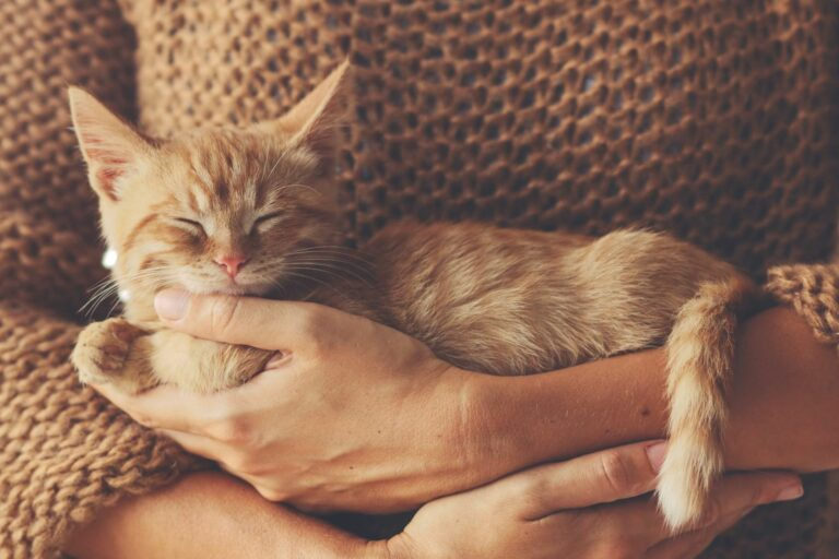 Kitten im Arm