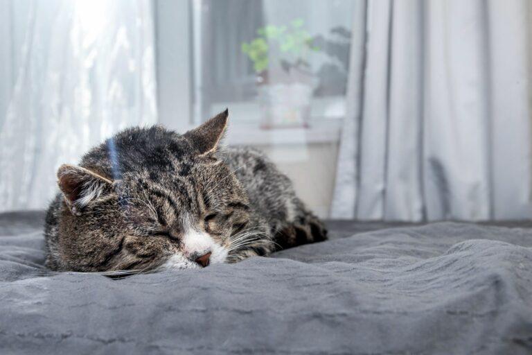 alte Katze einschläfern lassen