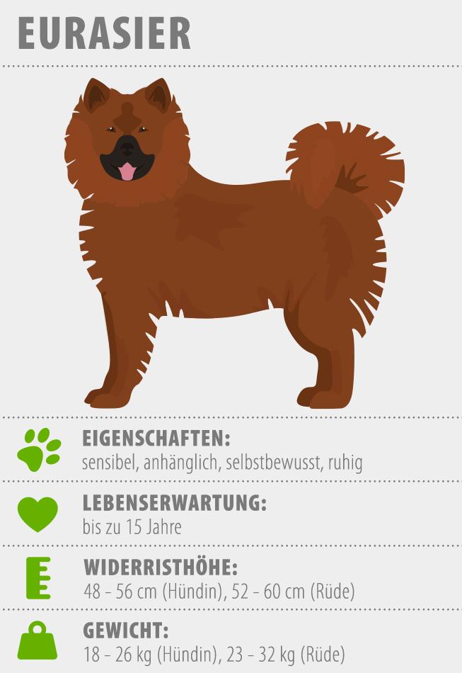 Merkmale Eurasier Hund