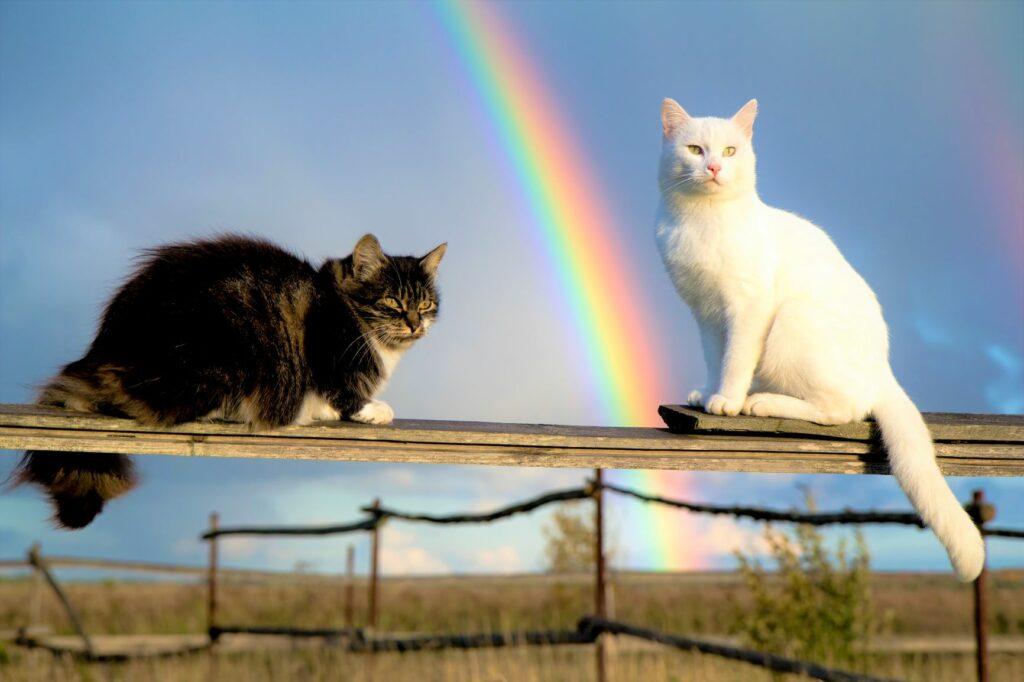 Zwei Katzen auf Zaun vor Regenbogen