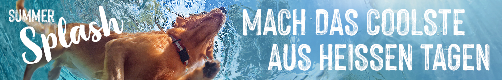 summer_splash_campaign_IA_dog