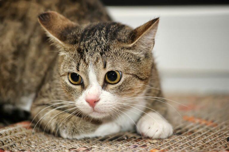 Katzenpsychologie für Katze