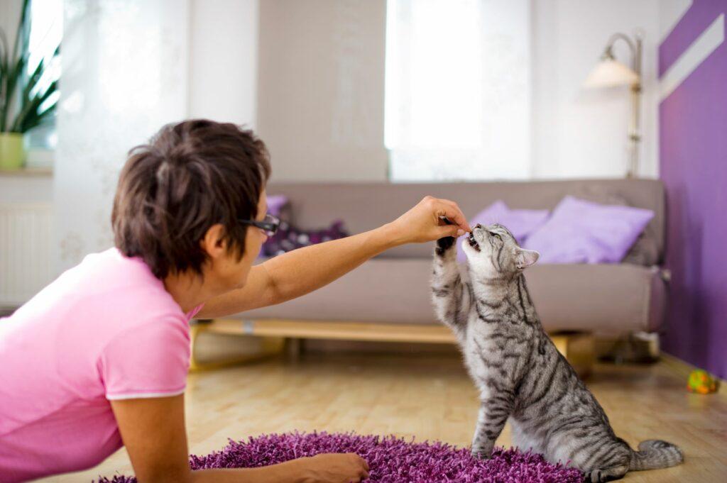 Katze Frau Belohnung Therapie