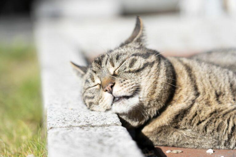 Katze sonnt sich