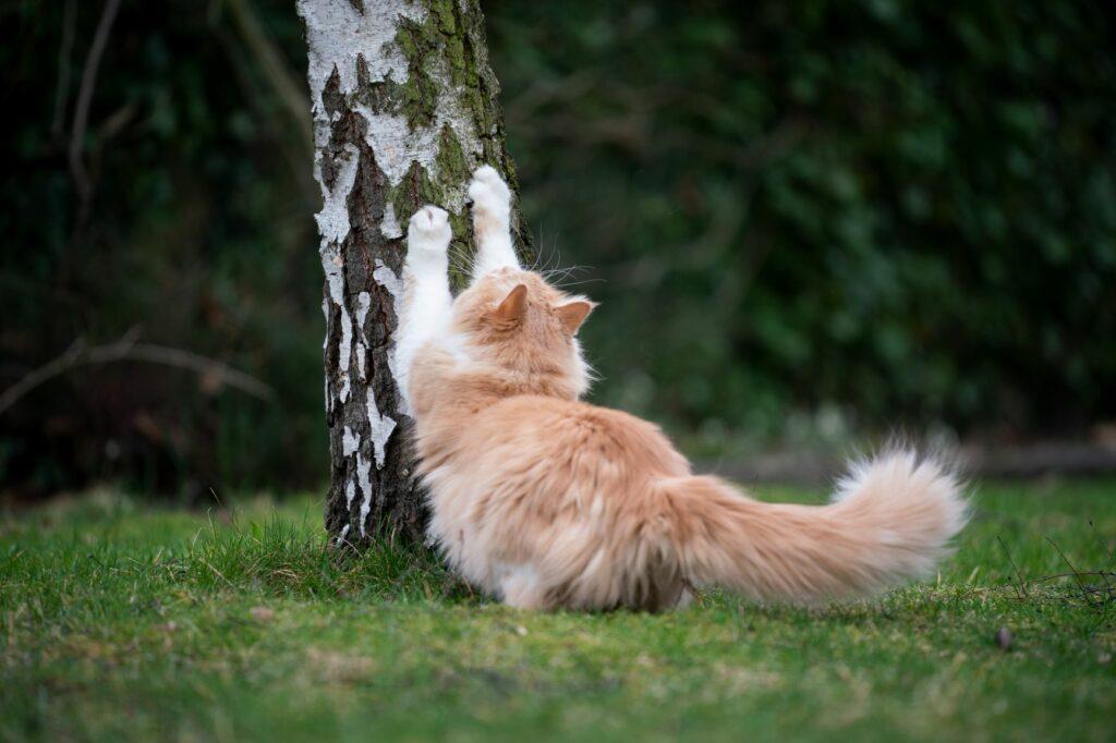Katze kratzt am Baumstamm