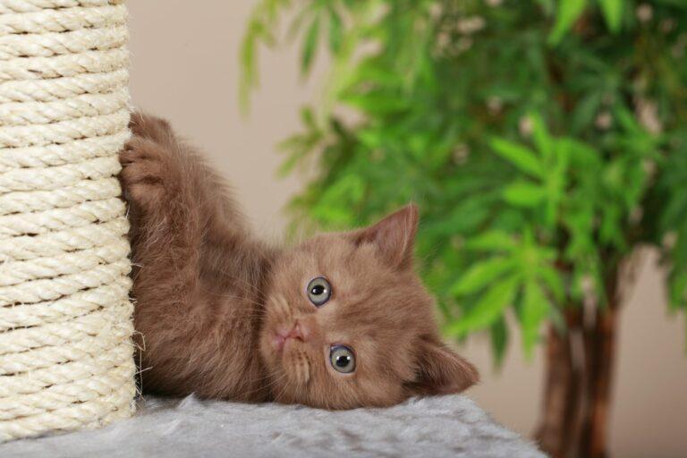 Kratzbaum selber bauen für Kätzchen
