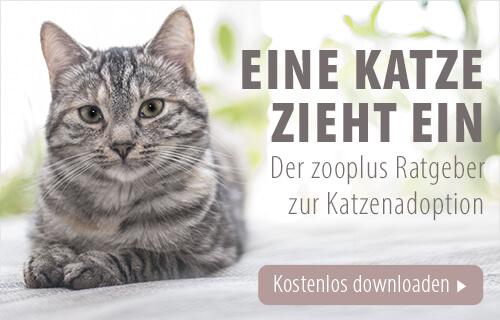 Banner zum Katzen Adoptionsratgeber von zooplus