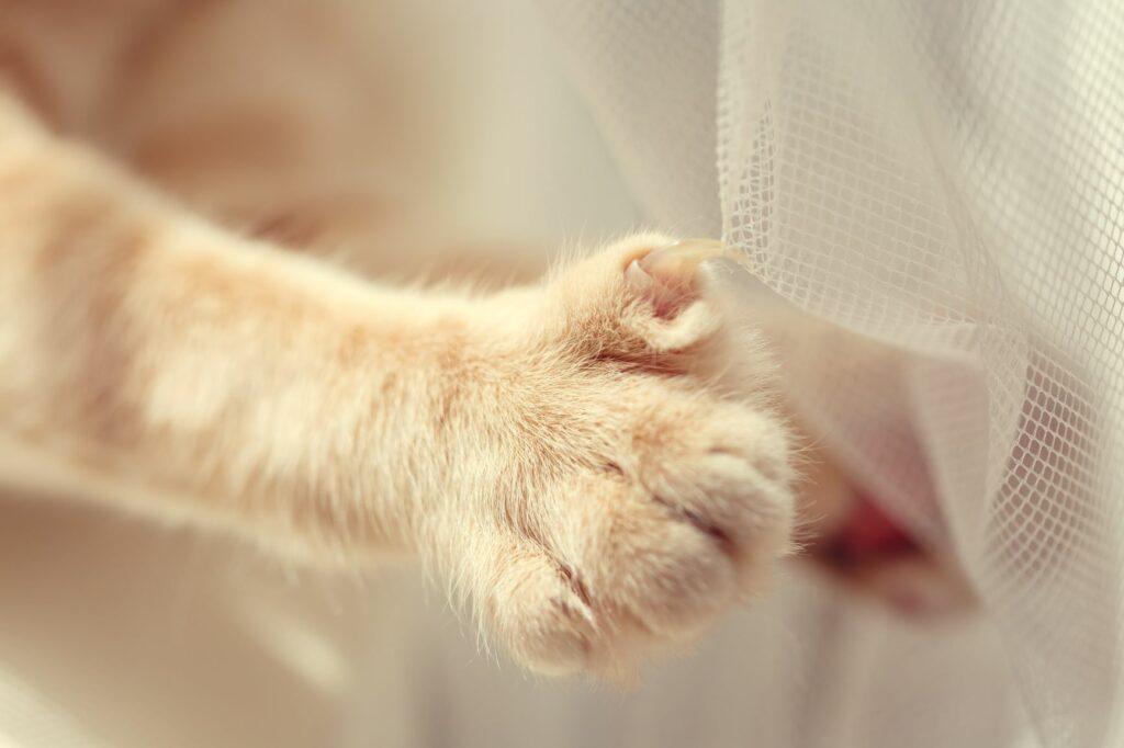 Lange Katzenkrallen Vorhang