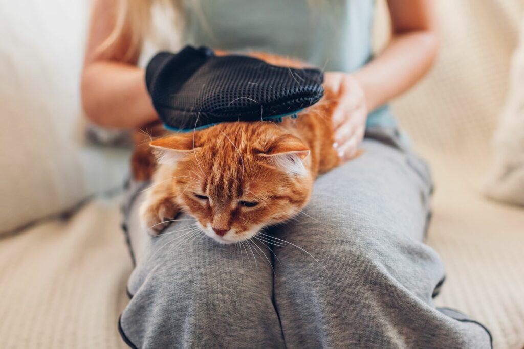 Katze Fellpflege Fellhandschuh