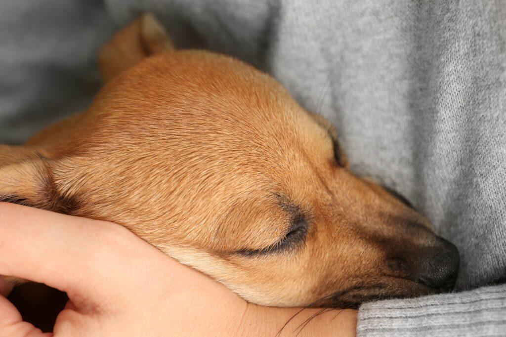 Hund im Arm