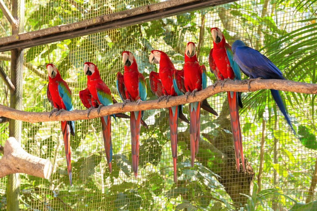 Ara-Papageien Voliere