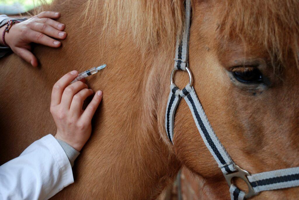 Pferd bekommt Spritze