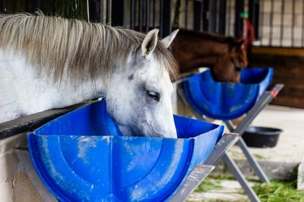 Pferd frisst im Stall