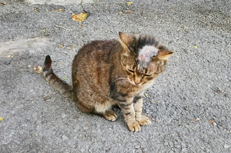 Hautpilz bei Katzen